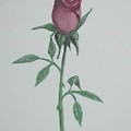 A Single Red Rose by Hilda and Jose Garrancho