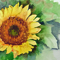 A Single Sunflower by Katherine  Berlin