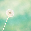 A Single Wish by Amy Tyler