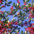 A Sky Full Of Holly by Lucyna A M Green