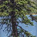 A Slice Of Pine by Joseph Yvon Cote