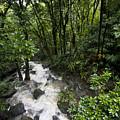 A Small River Flows Through A Dense by Hannele Lahti