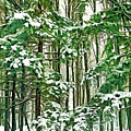 A Snowy Day - Paint by Steve Harrington
