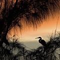 A Snowy Egret (egretta Thula) Settling by John Edwards