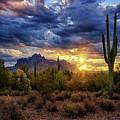 A Sonoran Desert Sunrise - Square by Saija Lehtonen