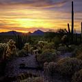 A Southern Arizona Sunset  by Saija Lehtonen