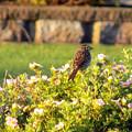 A Sparrow Surveys by William Tasker