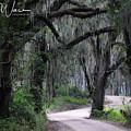 A Spooky Road by Alfie Wace