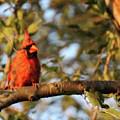 A Spot Of Red In The Trees by Scott D Van Osdol
