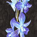 A Spray Of Orchids by Alexis Grone