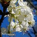 A Spring Delight by Maria Urso