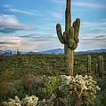 A Spring Evening In The Sonoran  by Saija Lehtonen