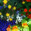 A Spring Garden Medley by Andrea Freeman