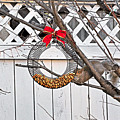 A Squirrel Christmas by V Oakes