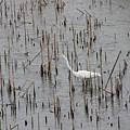A Stroll Through The Marsh by Laura Martin