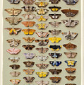 A Study Of Moths Characteristic Of Indo by Marian Ellis Rowan