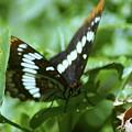 A Summer Butterfly  by Jeff Swan