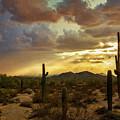 A Summer Evening In The Sonoran  by Saija Lehtonen