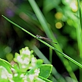 A Summer Of Dragonfly Kisses by Michiale Schneider