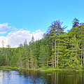 A Summers Day On Nicks Lake by David Patterson