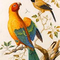 A Sun Conure Parrot  by MotionAge Designs