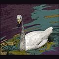 A Swan Me A Swan by David Carter