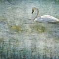 A Swan's Reverie by Belinda Greb