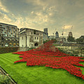A Sweep Of Poppies  by Rob Hawkins