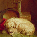 A Terrier by John Fitz Marshall