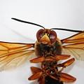 A Thug Bug by Jennifer Churchman