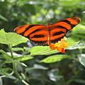 A Tiger Amongst The Petals by David Dunham