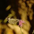 A Tilting Butterfly  by Jeff Swan