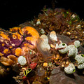 A Ton Of Tunicates by Mumbles and Grumbles
