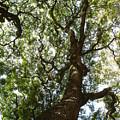 A Tree by Chandelle Hazen