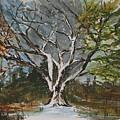 A Tree For All Seasons  by Vivan Robinson
