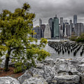 A Tree Grows In Brooklyn Looking At Manhattan by Mike Deutsch
