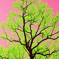 A Tree Grows In Vegas by Valerie Fuqua