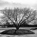 A Tree In Fort Worth by Frank Verreyken