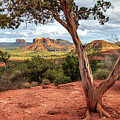 A Tree In Sedona by James Eddy