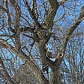 A Tree In Winter- Vertical by Michiale Schneider