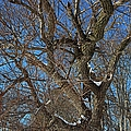 A Tree In Winter- Horizontal by Michiale Schneider