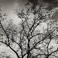 A Tree Laid Bare by Robert Ullmann