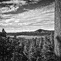 A Tree Stands Guard Over Big Bear Lake by Douglas Craig