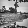 A Tree Stands Tall by Lora Lee Chapman