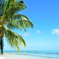 A Tropical Palm Tree Beach by IPics Photography