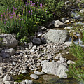 A Vail Stream by Madeline Ellis