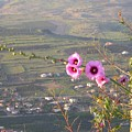 A View From Mt. Arbel by Susan Heller