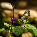 A  View Of A Butterfly by Bruce Nikle