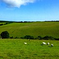 A View Over Exmoor 2 by Joan-Violet Stretch