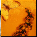 A Vintage Flower Butterfly by Marsha Heiken